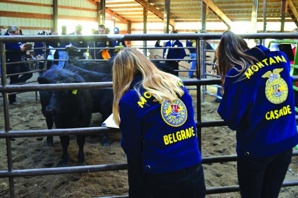 FFA competitors from Belgrade and Cascade evaluate cattle during the Ruby Valley Invitational in Sheridan on Tuesday, September 25. Students had to rank the animals from 1-4 and also give the reasons behind their rankings.