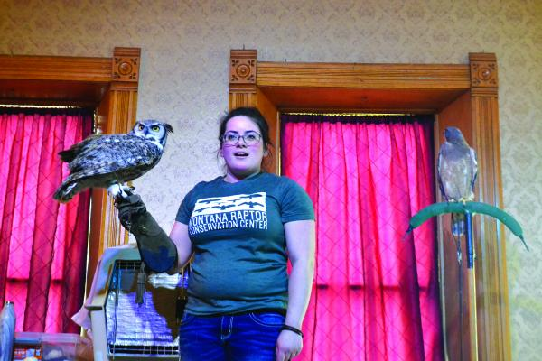 Montana Raptor Conservation Center's Teresa Aldrich holds Bu, a Great Horned Owl, during a presentation at the Elling House on February 2. Chaco, a Swainson's Hawk, rested happily on a perch during the entire demonstration.