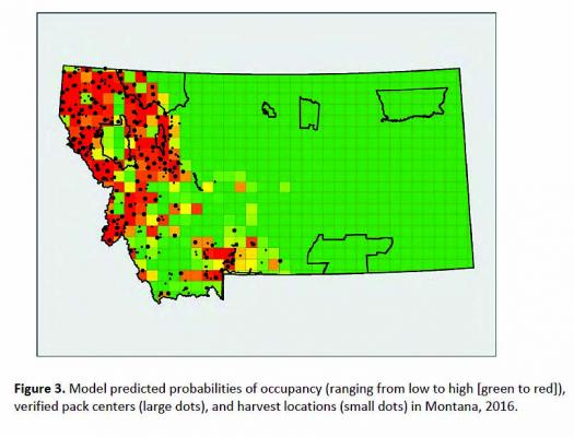 This model shows the predicted probabilities of occupancy, ranging from low (greeen)  to high (red) of verified wolf pack centers (large dots) and harvest locations (small dots) in Montana during 2016. (FWP)