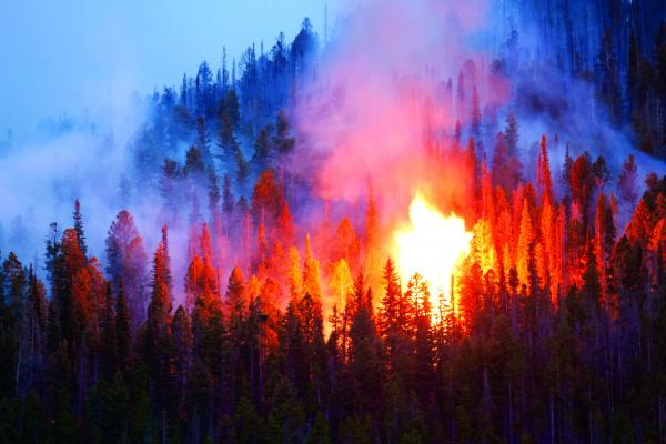 As of Monday afternoon, the Virgina Creek fire, near McAllister, torched 15 acres and was still burning. It was possible, if the fire jumped certain boundaries, that evacuations of South Meadow Creek homes would be ordered. (Howard Sheridan photo)