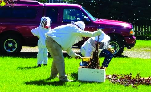 Brian Stoner (center) sweeps bees off a branch into a hive box on Friday, July 13. The bees were relocated to the home of a nearby beekeeper who had lost a hive last winter. (Patti Warburton photo)