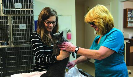 Dr. Stacy Davidson (left) and Linda Dombrowsky (right) use cold laser therapy to treat the 12-year-old Russian Blue cat, Jack. (H. Kearse)